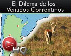Iberá: En 15 años pueden extinguirse los venados a causa de las forestaciones