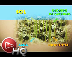 Cómo producen fotosíntesis las plantas, alimento base de la cadena alimentaria