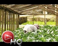 Impacto del cultivo de arroz en los Esteros del Iberá (1º Parte)