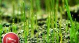 Qué es y cómo funciona la sucesión ecológica en la naturaleza
